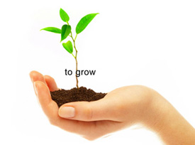 A hand holding a small plant and some soil against a white background