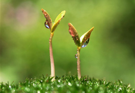 Image of two plants growing in the ground